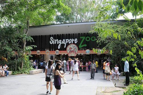Singapore-Zoo-duoc-binh-chon-la-vuon-thu-dep-nhat-Chau-A